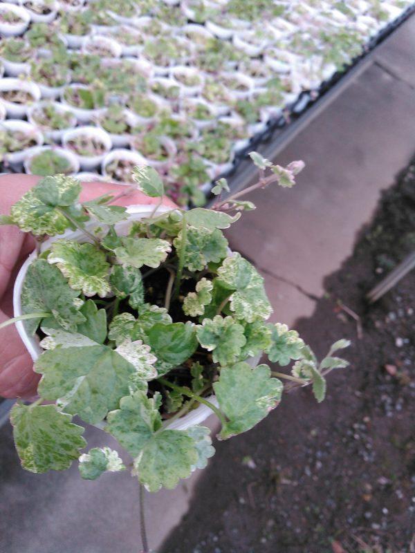 寄せ植えプランツサムネイル