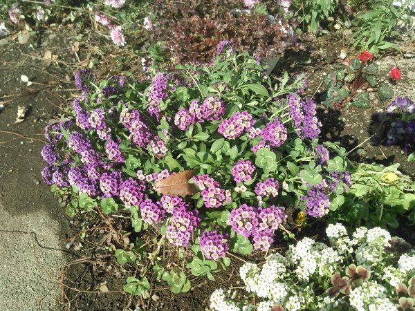 雪後の植物たちサムネイル