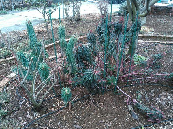 冬の庭を見てくださいサムネイル