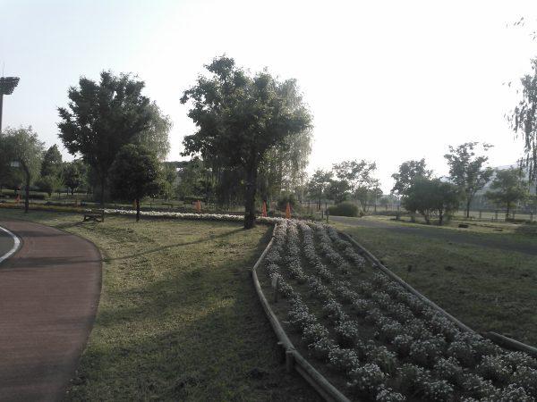 夏花壇プロジェクトサムネイル