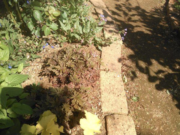 会長自慢のお庭サムネイル