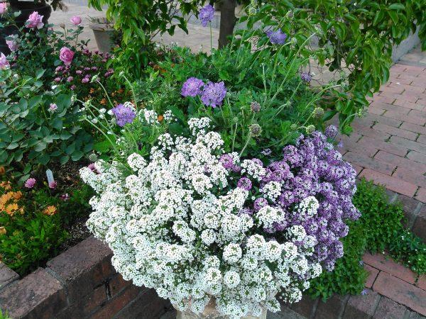 庭のバラたち、ベストシーズンサムネイル