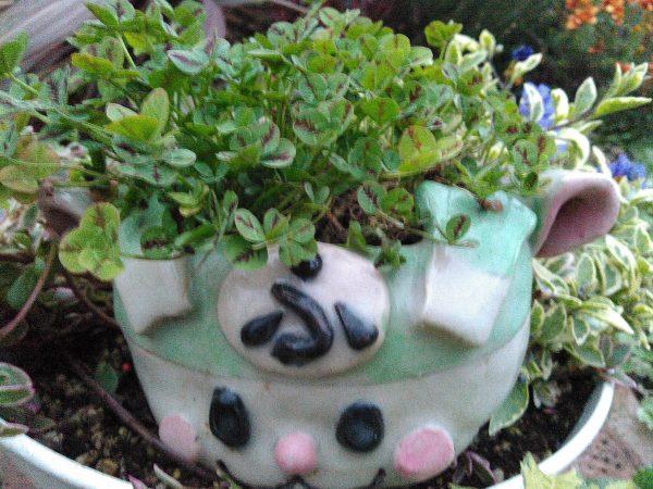 幸せの四つ葉のクローバーサムネイル