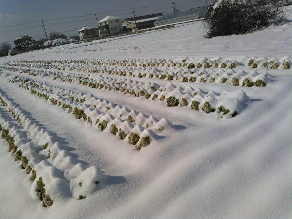 雪でした。サムネイル