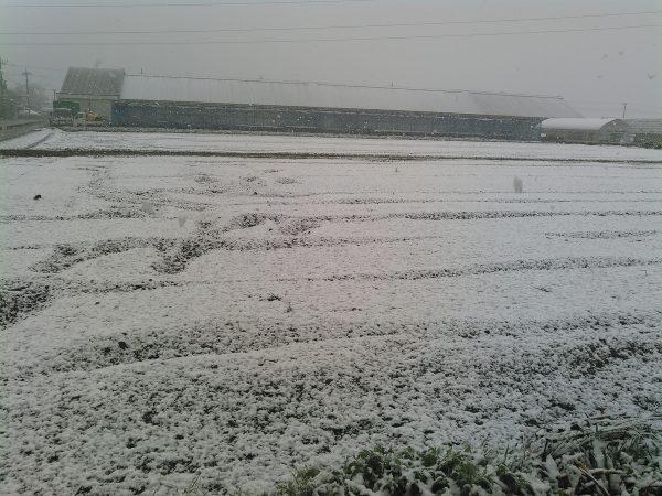 雪降った!?サムネイル