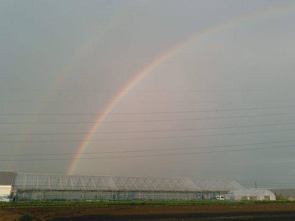 虹サムネイル