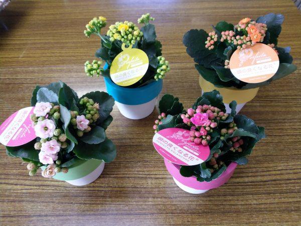 頭の良くなる花 × パーフェクタサムネイル